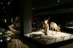 Museum Artikum Rovaniemi @ Rena Hackl fotografiert 2018
