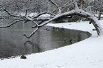 Winter im Stadtpark in Wien @ Rena Hackl fotografiert 2018