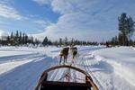 Schlittenhundefahrt in Lappland @ Rena Hackl fotografiert 2018