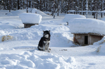 Schlittenhunde in Lappland @ Rena Hackl fotografiert 2018
