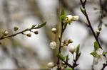 Frühling im Prater 2018 © Rena Hackl fotografiert